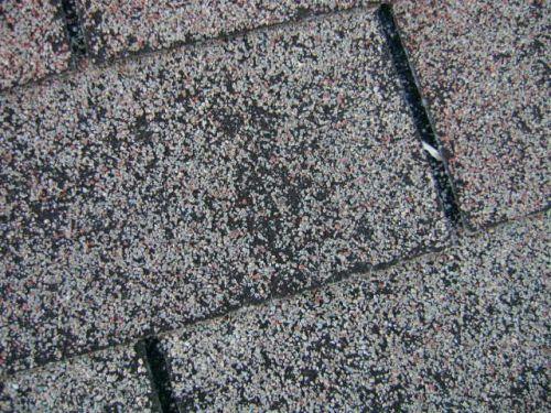 Granule loss on a worn shingle